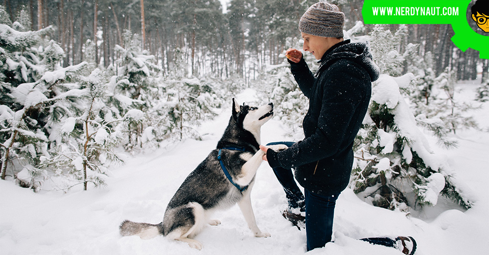 Mistakes Dog Trainers Make