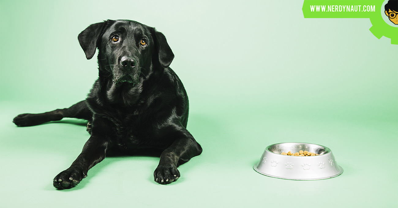 How to keep the dog from eating cat food