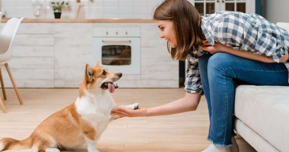 Heel Training: What Do Dog Owners Need to Know About This Important Command?