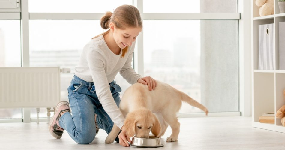 What You Need to Know to Feed Your Dogs Safe and Healthy Food Only